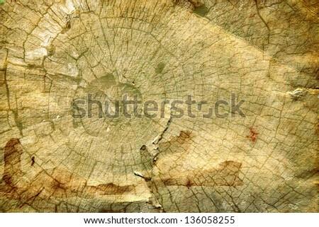 wood grungy background - stock photo