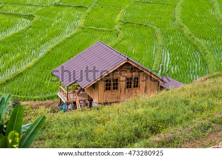 wood house in cornfield