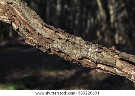 Wood in forest - stock photo