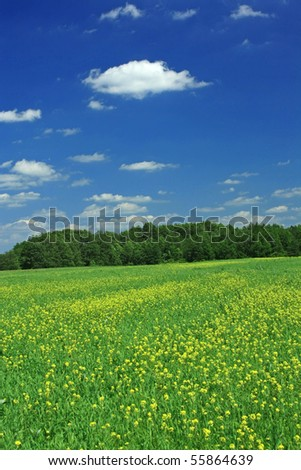 Wood in summer - stock photo