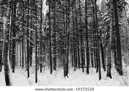 wood in winter