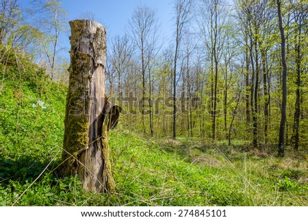 Wood log in a forest scenery in the spring - stock photo