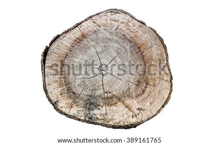 wood log top view - stock photo