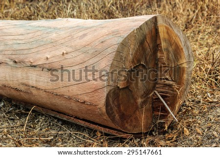 wood logs in forest - stock photo
