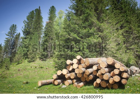 wood logs in the forest - stock photo