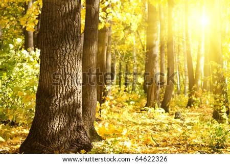Wood  oak  sun - stock photo