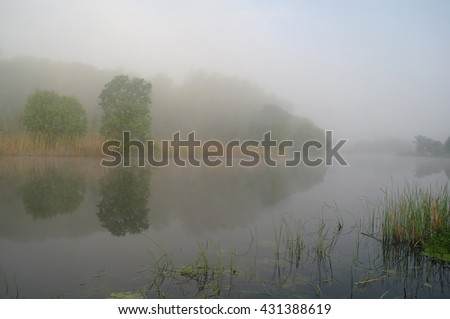 Wood on coast of the river, morning - stock photo