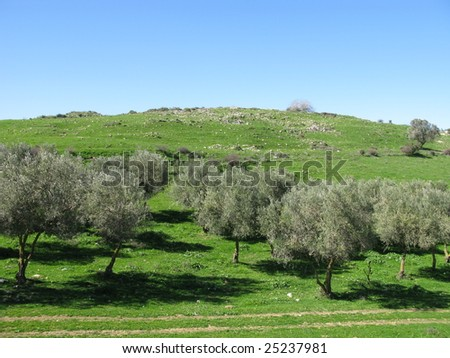 wood on mountains in north of Israil