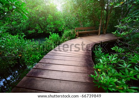 Wood path over river and through tropical forest - stock photo