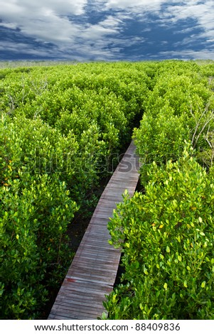 Wood path way among the Mangrove forest, Thailand - stock photo