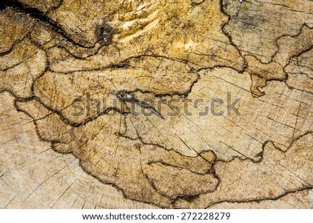 wood pattern map from termite bite - stock photo