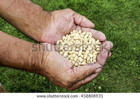 Wood pellets in the soil. Biofuels. The cat litter. Men hands.Hands of an elderly person. - stock photo