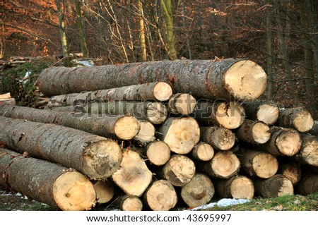 Wood pieces in the forrest - stock photo