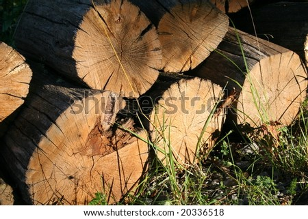Wood Pile - stock photo