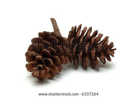 Wood pine fir cones - stock photo