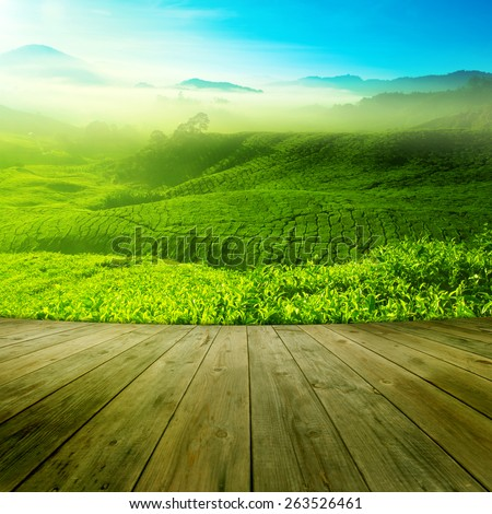 Wood platform landscape view of tea plantation with blue sky in morning. Beautiful tea field Cameron Highlands in Malaysia. - stock photo