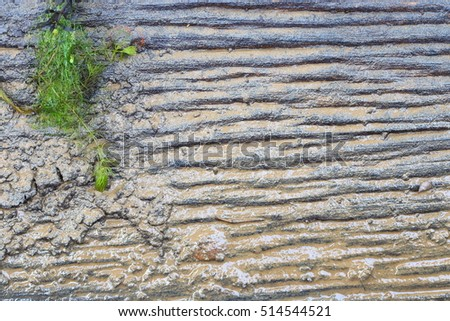 Wood Sheet underwater, wet with mud and soil, green weed, copy space for text and logo