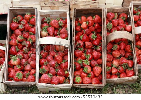 wood splint basket with strawberries - stock photo