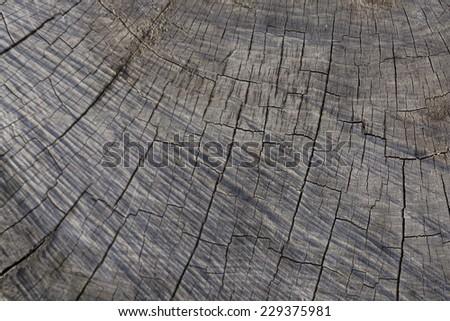 wood stump texture  - stock photo