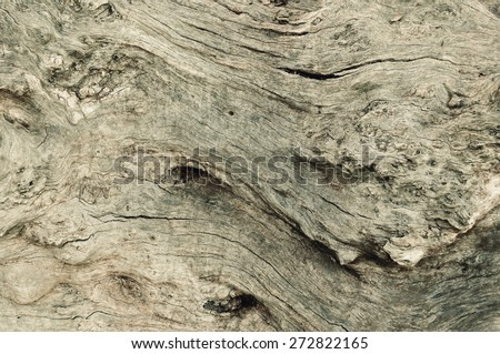 wood surface oak tree bark old background texture surface - stock photo