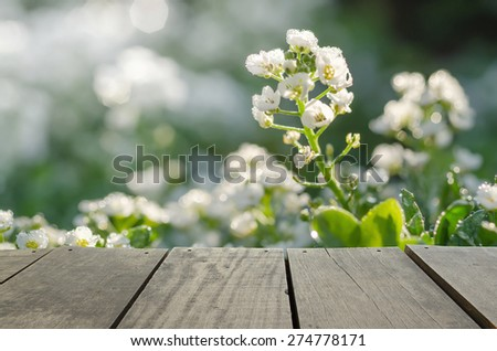 wood terrace and green grass field in morning time use as natural background,backdrop - stock photo