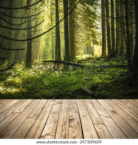 Wood terrace and perspective view on green morning forest with sunbeams