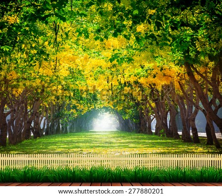 wood terrace with fresh and green beautiful of summer blooming yellow flowers tunnel in park , Golden shower,Cassia fistula,perspective land scape use for natural background,backdrop - stock photo