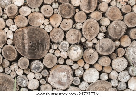 Wood texture background have many log that cut from big tree and small tree - stock photo