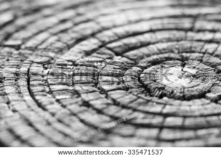 Wood texture macro photography