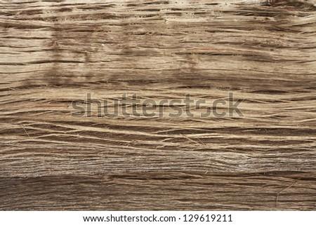 Wood texture of Himalayan tree, Annapurna Region, Nepal - stock photo