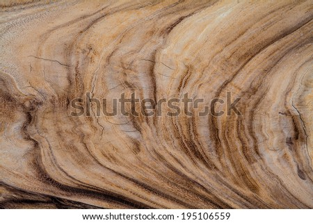 wood texture,tree year rings - stock photo