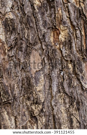 wood texture/trunk Brown surface