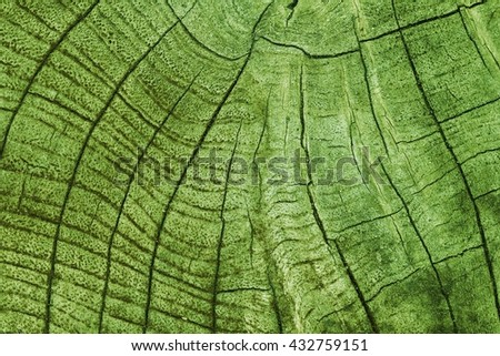 Wood texture with natural pattern / Tree timber texture for background - stock photo