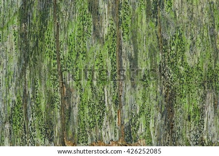 Wood texture with natural pattern. / Wooden board filled with moss . - stock photo
