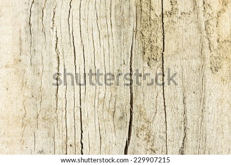 Wood Texture./ Wood Texture.  - stock photo