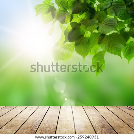 wood textured backgrounds in a room interior on the field backgrounds  - stock photo