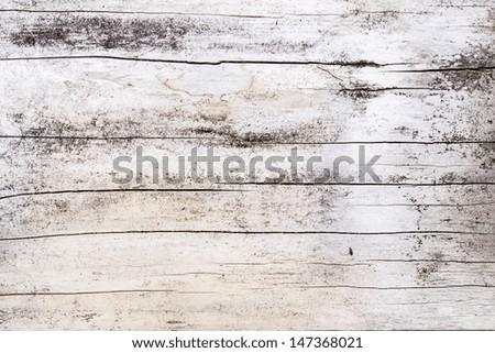 Wood tree texture pattern - stock photo