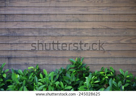 Wood wall and green leave - stock photo
