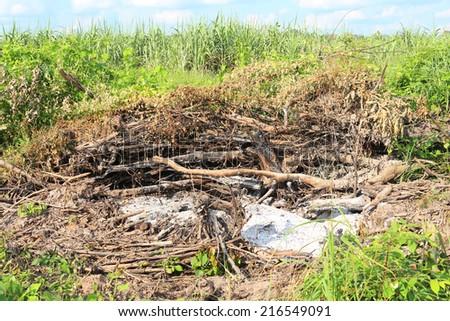 Wood was burned - stock photo