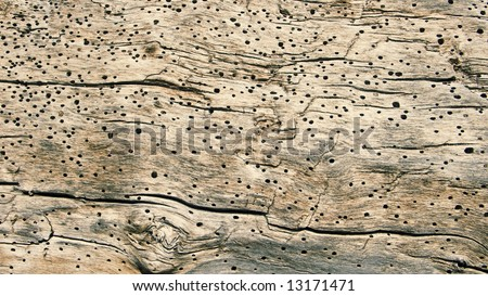 Wood with woodworm - stock photo