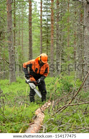 Woodcutter cuts the branches cut tree chainsaw. Northern Finland, Lapland - stock photo