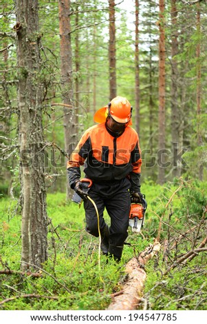 Woodcutter cuts the branches cut tree chainsaw. Northern Finland, Lapland