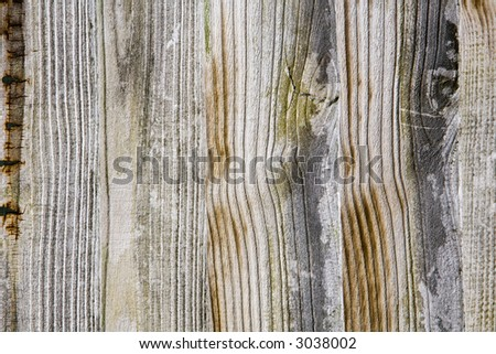 wooded background