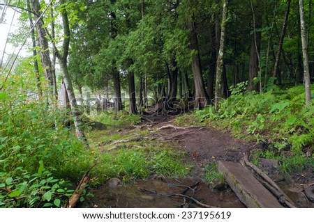 Wooded trail through lush forest and stream crossing at Jay Cooke State Park in Minnesota - stock photo
