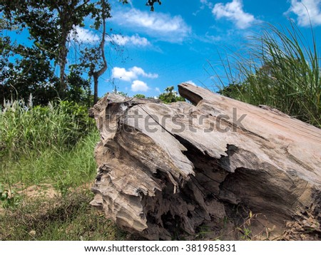 wooden background from the old stump gray - stock photo