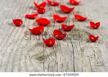 wooden background with petals of red rose. selective focus