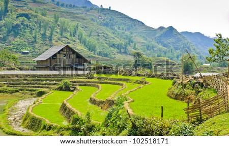 Wooden barn in rice terraced field, Vietnam