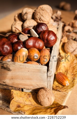 wooden basket full of autumn acorns, cones and chestnuts  - stock photo