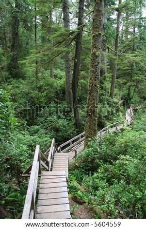 wooden boardwalk in the rainforest
