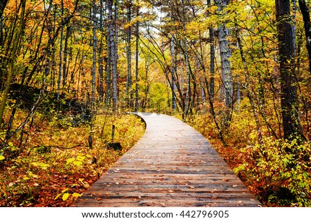 Wooden boardwalk through autumn forest in Jiuzhaigou nature reserve (Jiuzhai Valley National Park) of Sichuan province, China. Yellow and red trees in fall woods. Beautiful landscape. - stock photo